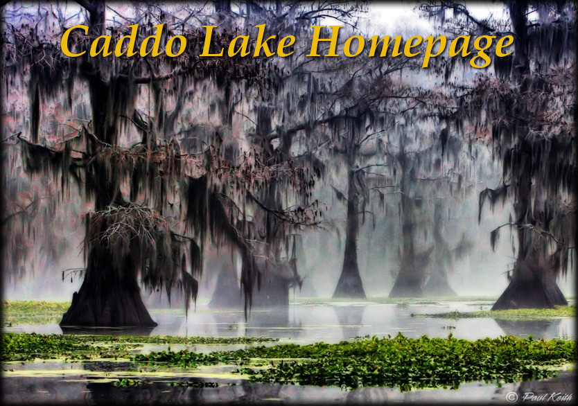 The caddo lake home page for Caddo lake fishing report